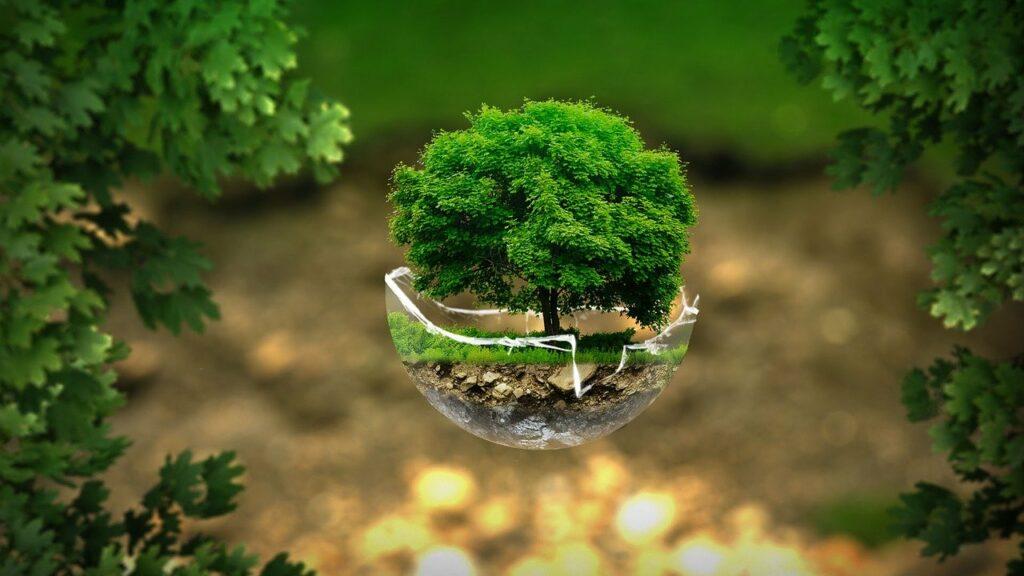 Immer mehr Gebrauchsgüter und Lebensmittel orientieren sich am Klimaschutz sowie an einer menschen- und tierfreundlichen Ethik.