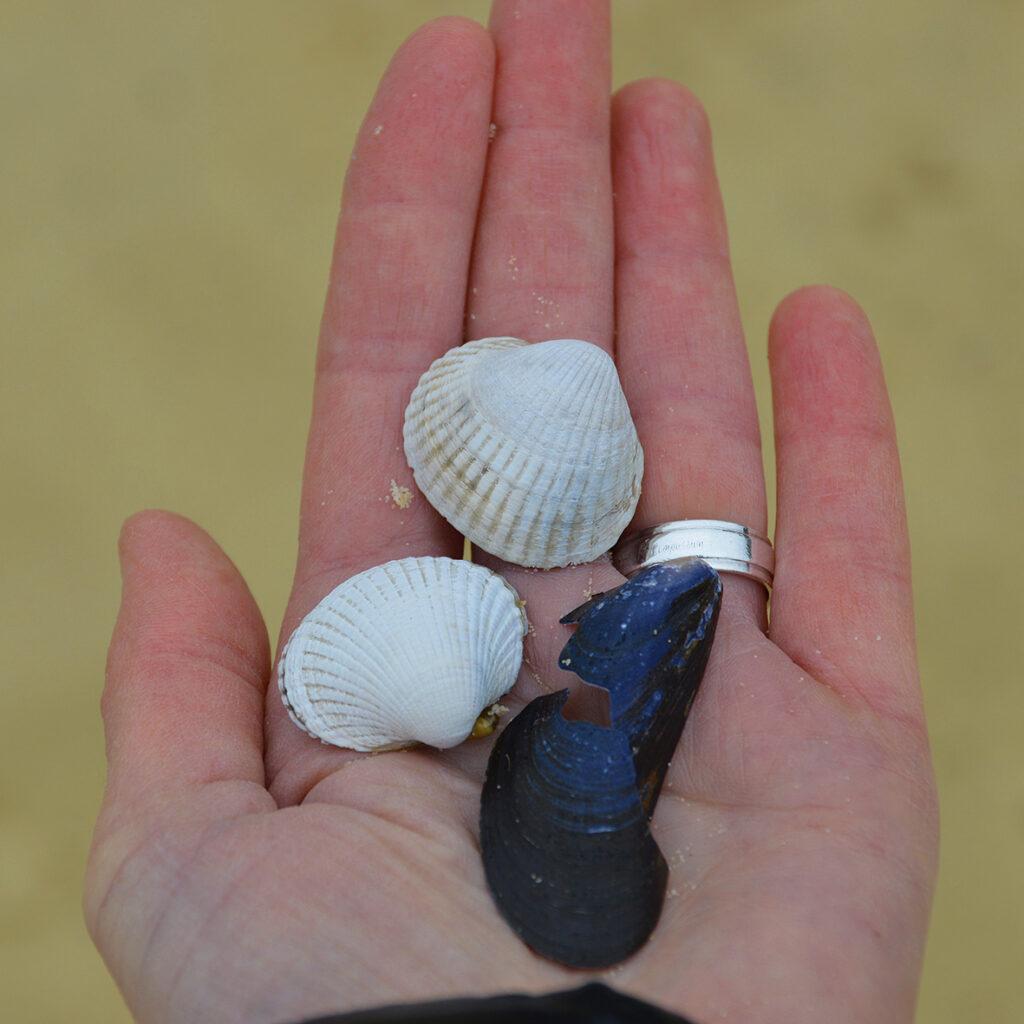 Diejenigen, die am Strand achtsam spazieren gehen, werden auch dort immer wieder Materialien finden, die Verletzungen aufweisen - so wie die blaue Muschel.