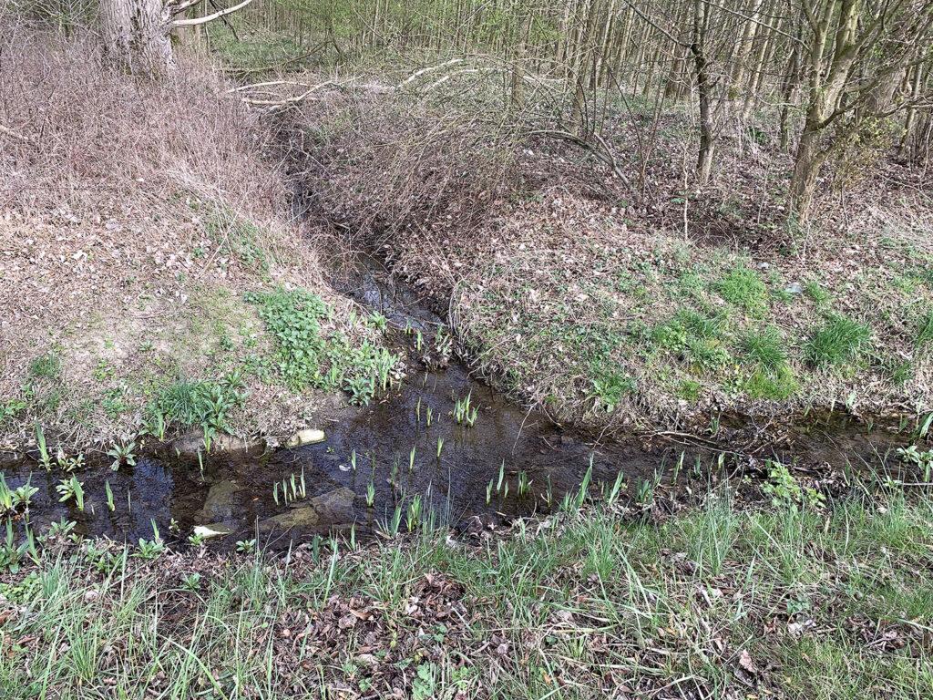 Menschen, die im Wald achtsam spazieren gehen, könnten in einem Bachlauf eine Entscheidungshilfe erkennen.