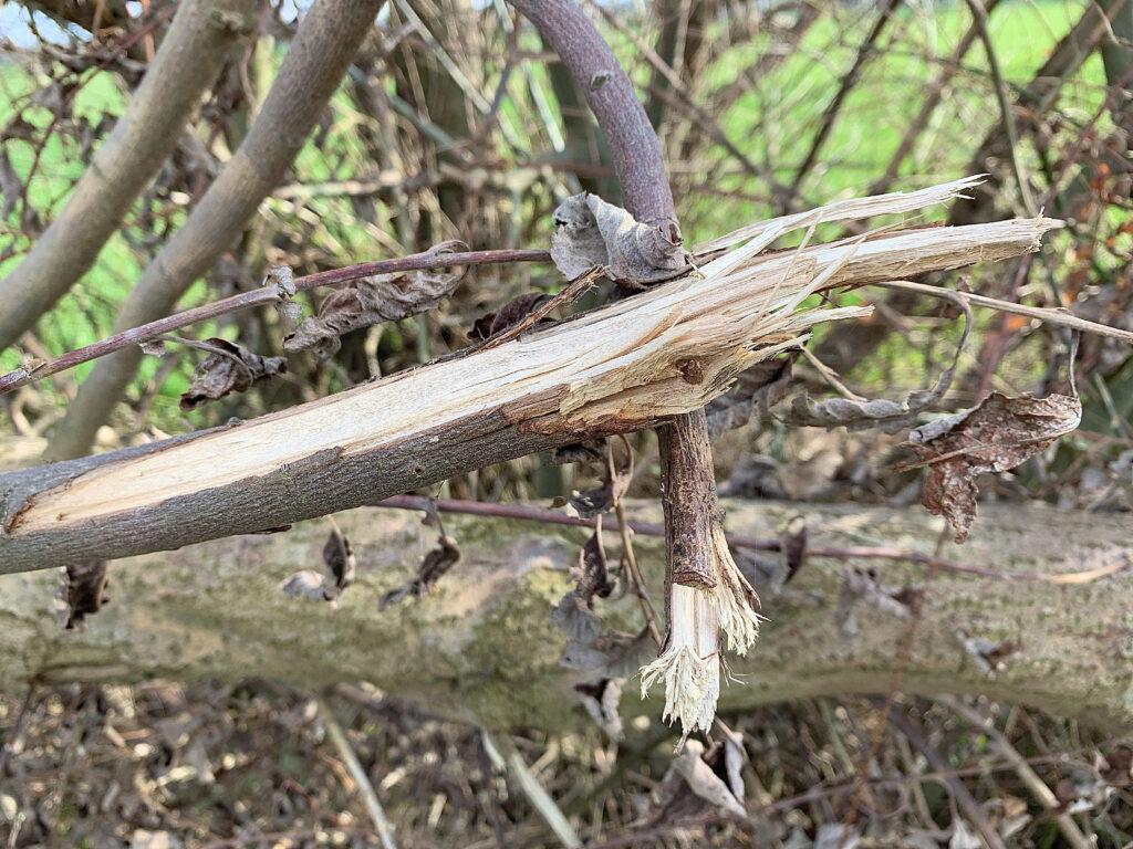 Beim achtsamen Spaziergang entdecken wir sehr oft abgebrochene Äste oder entwurzelte Bäume - Symbole der Verletzung innerhalb der Natur.