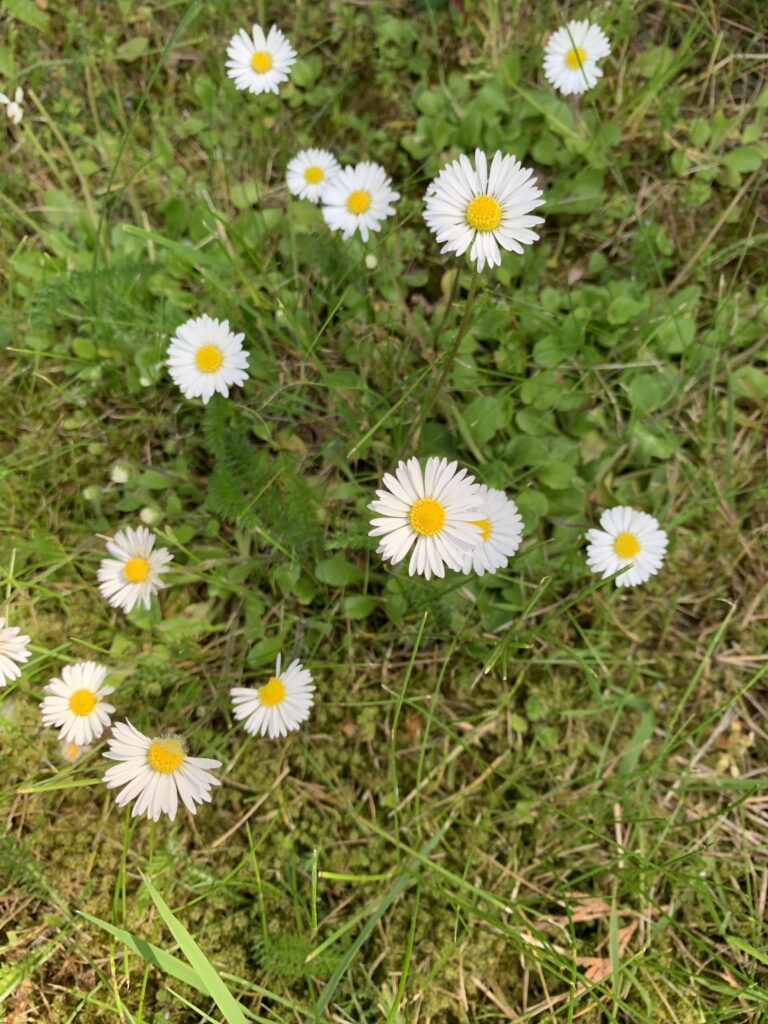 Blumen haben spirituelle Bedeutung - selbst ein Gänseblümchen. Es erinnert an die Bescheidenheit der Gottesmutter Maria